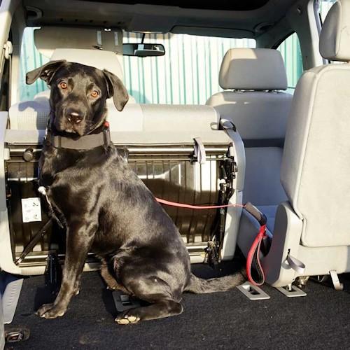 laisse pour chien avec poign e voyage voiture l24. Black Bedroom Furniture Sets. Home Design Ideas