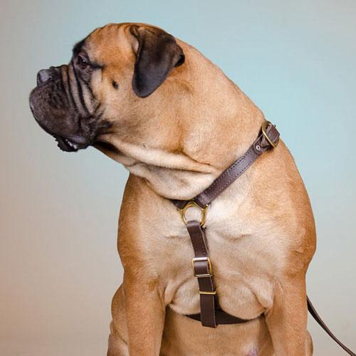 harnais de cuir renforc pour un grand chien. Black Bedroom Furniture Sets. Home Design Ideas